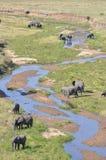Afrika elefanter Arkivbilder