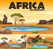 Afrika-Hintergründe mit kleinen Teichen und Bäumen vektor abbildung