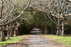 Afrika pittoresk by av Mont Choisy i Mauritius Arkivfoton