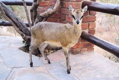 Afrika - Südafrika - Kruger-Park stockfotos
