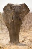 Afrika-Safari Lizenzfreie Stockbilder