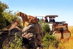 Afrika, Tanzania, het Nationale Park van Serengeti - Maart 2016: De jeeptoeristen fotograferen de trots van de leeuwen stock afbeelding