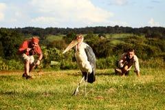Afrika, Tanzania, Ngorongoro-Krater - 7 Maart, 2016: De toeristen nemen foto's van wilde marabu in het Nationale Park van Ngorong royalty-vrije stock fotografie