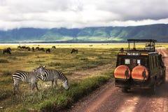 Afrika, Tanzania, Ngorongoro-Krater - Maart 2016: Jeepsafari stock afbeeldingen