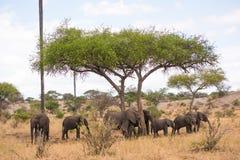 Afrika tarangire Royalty-vrije Stock Foto's