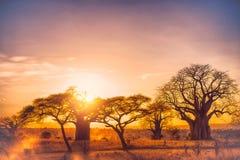 Afrika tarangire Stock Afbeelding