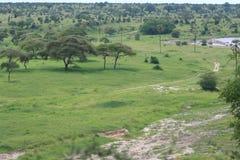 Afrika, Tarangire, Wald der Akazie Stockbilder