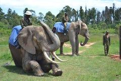 Afrika Royalty Free Stock Photo