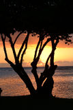 Afrika, zonsondergang in Mont Choisy in Mauritius Stock Foto's