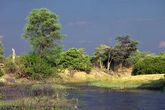 Afrikaans Landschap Stock Fotografie