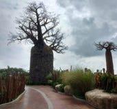 Afrikaans Landschap in de dierentuin royalty-vrije stock afbeeldingen