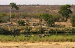 Afrikaans landschap. Olifanten Royalty-vrije Stock Afbeeldingen