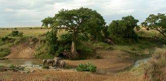 Afrikaans olifantslandschap Royalty-vrije Stock Afbeeldingen