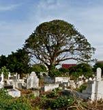 Afrikaanse begraafplaats met grote boom Stock Foto
