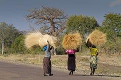 Afrikaanse dames die grasbundels dragen stock foto's