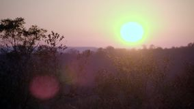 Afrikaanse de lensgloed van zonsopgangoorzaken stock video