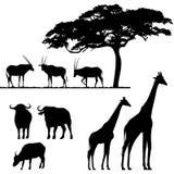 Afrikaanse dieren, silhouetten Royalty-vrije Stock Foto's
