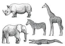 Afrikaanse dierenillustratie, tekening, gravure, inkt, lijnkunst, vector Stock Fotografie
