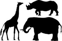 Afrikaanse Dierlijke Profielen Stock Afbeeldingen