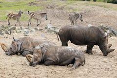 Afrikaanse fauna Royalty-vrije Stock Afbeeldingen