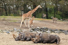 Afrikaanse fauna Royalty-vrije Stock Foto's
