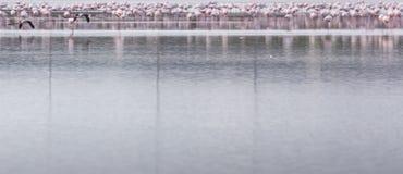 Afrikaanse flamingo's in het meer over mooie zonsondergang, troep van ex Stock Afbeelding