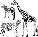 Afrikaanse gestreepte en spotty dieren Stock Afbeeldingen