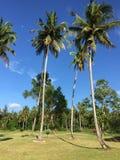 Afrikaanse golfcursus met palmen die fairway voeren stock afbeelding
