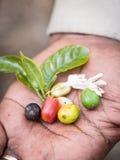 Afrikaanse koffie royalty-vrije stock fotografie