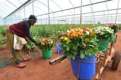 Afrikaanse landbouwer Royalty-vrije Stock Foto's