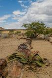 Afrikaanse landschappen - Damaraland Namibië Stock Afbeelding