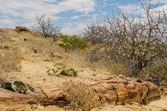 Afrikaanse landschappen - Damaraland Namibië Stock Afbeeldingen