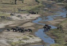Afrikaanse landschapsmening met olifanten en zebra stock afbeeldingen