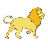 Afrikaanse leeuw Royalty-vrije Stock Afbeelding
