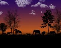 Afrikaanse nacht Stock Afbeeldingen