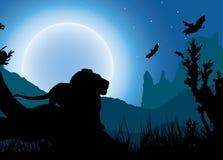 Afrikaanse nachtachtergrond Stock Fotografie