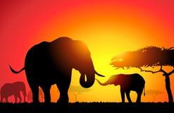 Afrikaanse Olifant - Stock Illustratie