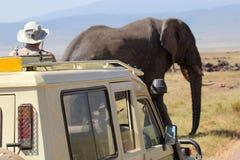 Afrikaanse olifant dichtbij een voertuig Stock Afbeeldingen