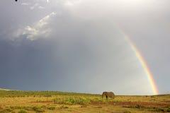 Afrikaanse olifant en regenboog in Zuid-Afrika royalty-vrije stock afbeelding