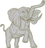 Afrikaanse Olifant het Steigeren Monolijn Stock Afbeelding