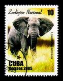 Afrikaanse Olifant (Loxodonta-africana), Nationale Dierentuin serie, circa Royalty-vrije Stock Afbeelding