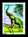 Afrikaanse Olifant (Loxodonta-africana), serie, circa 1991 Stock Fotografie