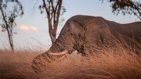 Afrikaanse olifant in Ndaka-Spelreserve in Zuid-Afrika stock foto