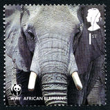 Afrikaanse Olifants Britse Postzegel Stock Foto