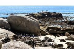 Afrikaanse pinguïnen stock foto