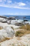 Afrikaanse pinguïnen bij het Strand van Keien Stock Fotografie