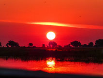 Afrikaanse safarizonsondergang over de Chobe-rivier Royalty-vrije Stock Foto's