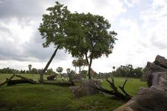 Afrikaanse Savanah stock afbeelding