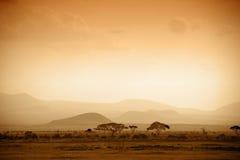 Afrikaanse savanne bij zonsopgang royalty-vrije stock foto