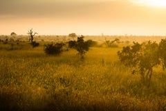Afrikaanse savanne bij zonsopgang stock fotografie